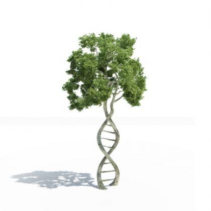 Genealogia-y-DNA